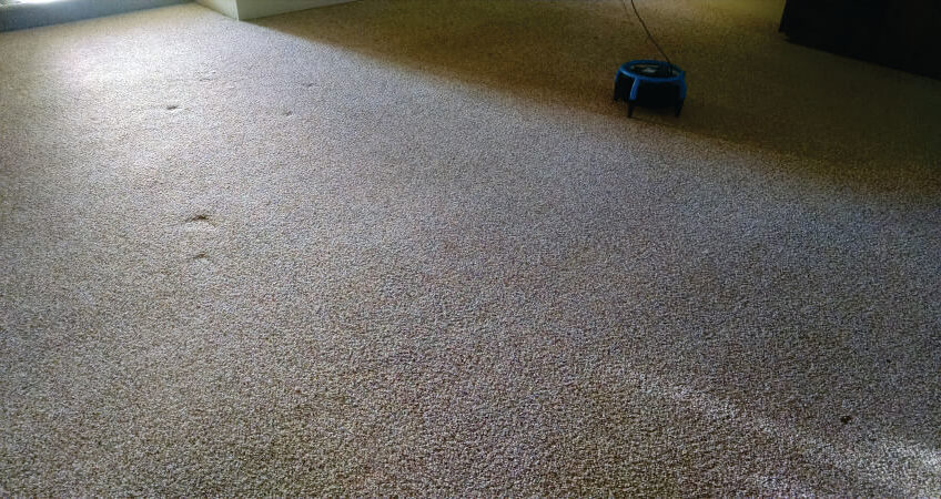tips to help you keep the carpets clean