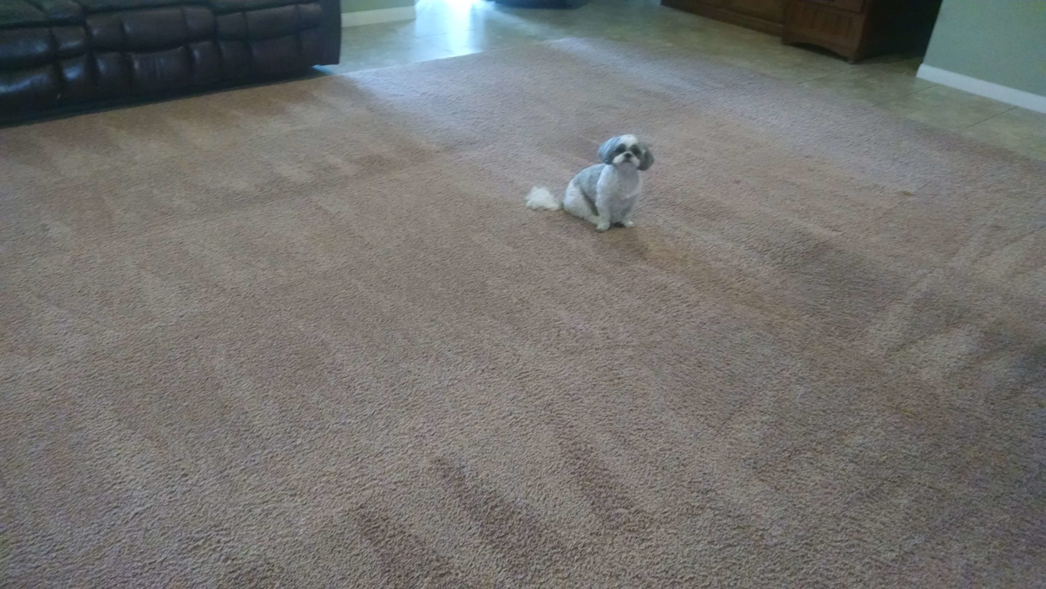 pet odor and stain removal bakersfield