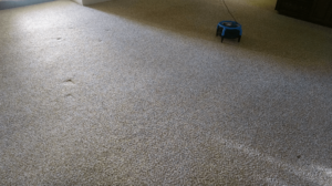 all pro carpet care after bakersfield