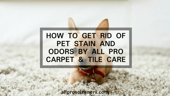 Pet stain and odor removal Bakersfield