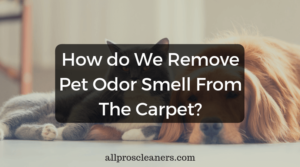 Remove Pet Odor From The Carpet