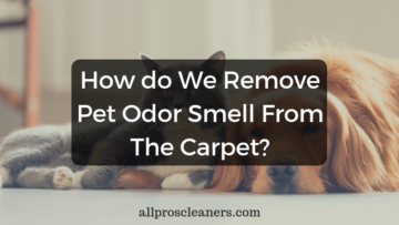 How do We Remove Pet Odor Smell From The Carpet?