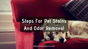Steps For Pet Stains And Odor Removal