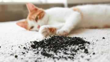 pet odor removal service cost