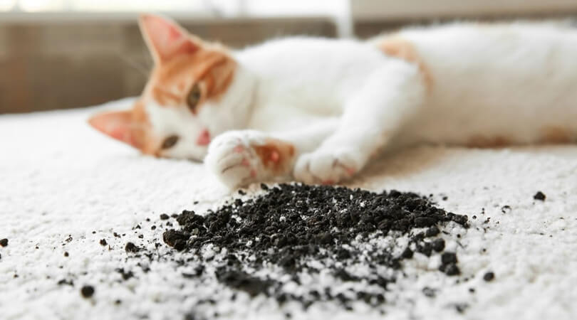 pet odor removal service cost