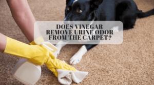 Does Vinegar Remove Urine Odor From The Carpet_