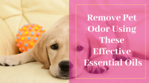 Remove Pet Odor Using These Effective Essential Oils